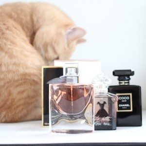 Best New Fragrances 2012 Autumn