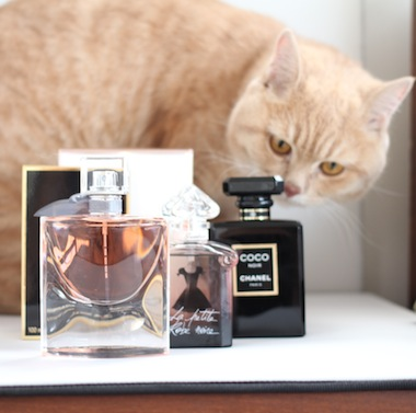 Three New Fragrances and Un Chat.