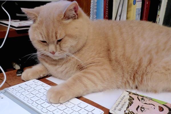 Quiet Please: Administrator at Work