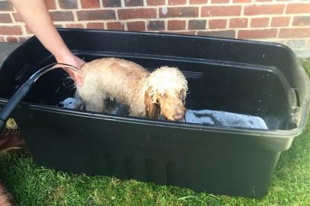 Sunday Tittle Tattle: Bad Books and Dog Baths.