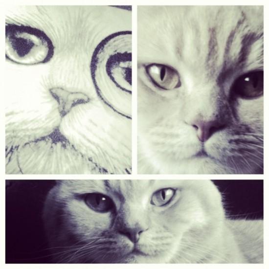 british shorthair cat pillow
