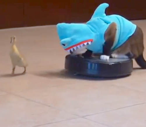 cat with shark with duck and hoover