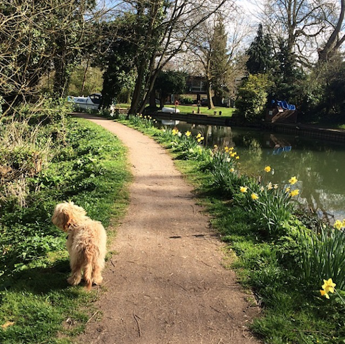 riverside dog walking springtime in britain