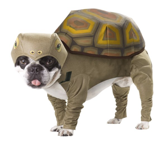 dog outfit tortoise