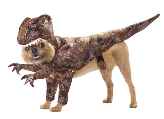 dinosaur dog outfit