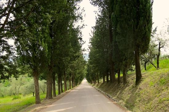tuscany tree-lined avenue