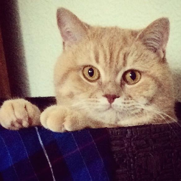 mr bear cat