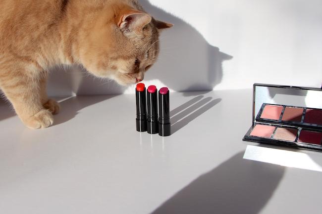 british shorthair cream cat pictures