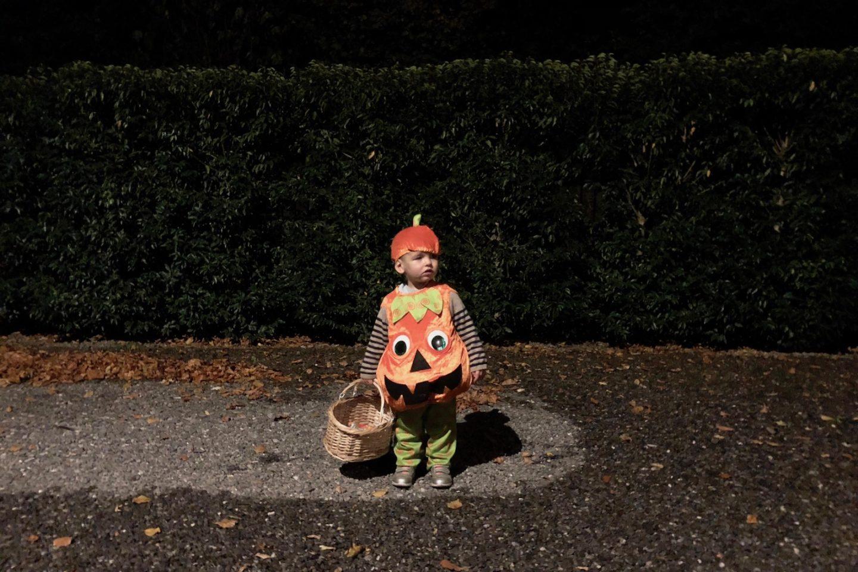 ted pumpkin